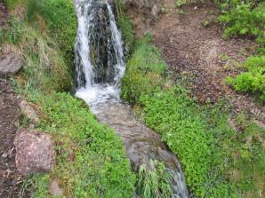 Brunnenkresse am Bach vor dem der daberer