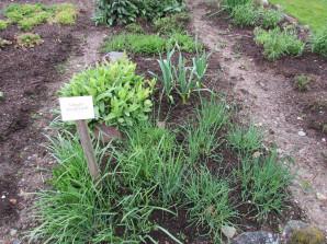 Kräutergarten vom der daberer