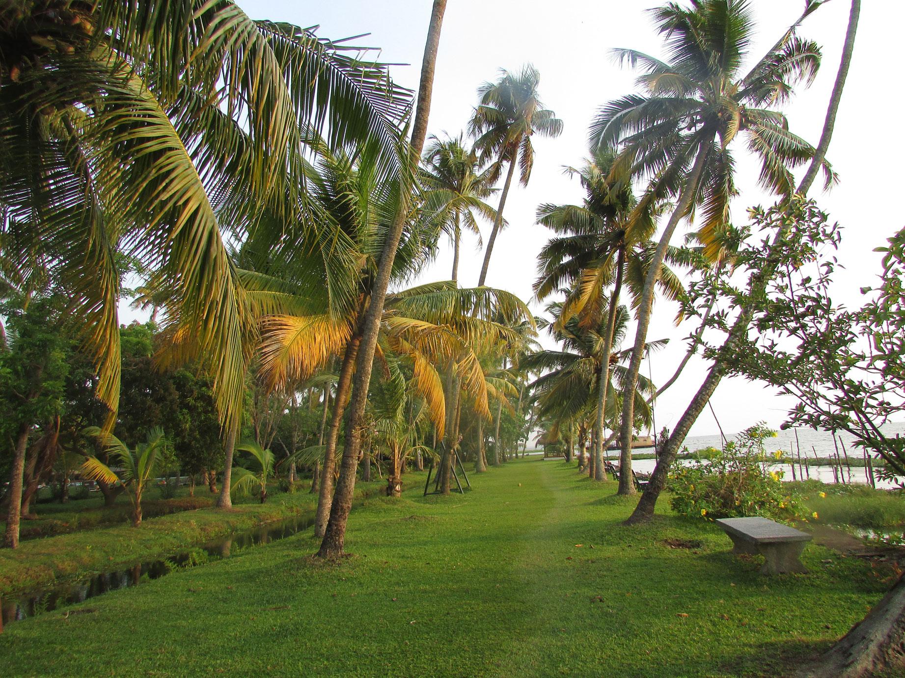 Coconut-Lagoon-11